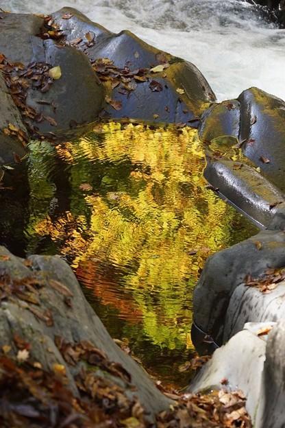 黄金色の水たまり
