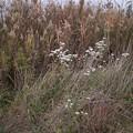 初冬の野の花