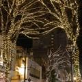 Photos: パセオ通り~光のしずくイルミネーション
