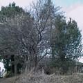 古い家と白梅
