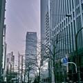 Photos: 東京にて 遠くが霞んで見える