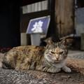 Photos: はい、猫です。何か?
