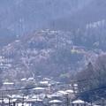 Photos: 雪の日の花見山