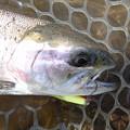 Photos: ワンダーで釣ったニジマス