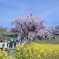 Photos: 三春滝桜への道
