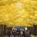 Photos: 銀杏並木と記念撮影