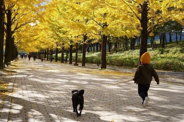 愛犬と走る