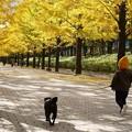 Photos: 愛犬と走る