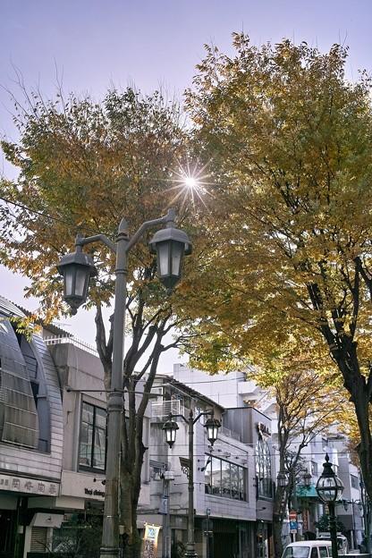 パセオ通りの街路樹