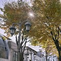 Photos: パセオ通りの街路樹