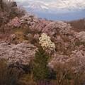 花見山と吾妻小富士