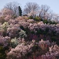 Photos: 花見山の頂上