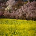 Photos: 花見山麓の散策路にて