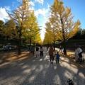 Photos: あづま総合運動公園のイチョウ並木