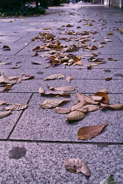 枯れ葉散る歩道