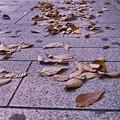Photos: 枯れ葉散る歩道