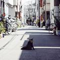 Photos: にゃーん