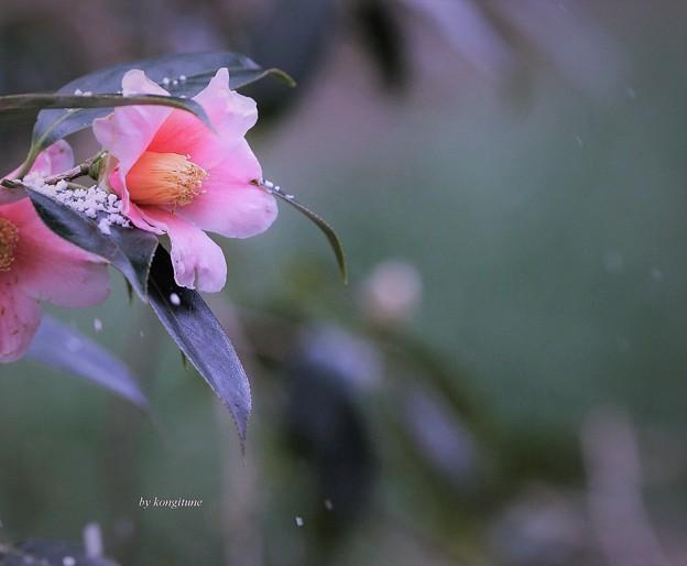 写真: 粉雪