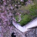 Photos: 長谷寺