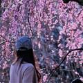 写真: 美しい・・・