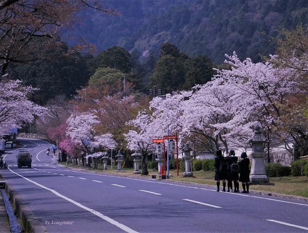 Photos: さくら坂