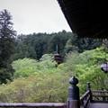 写真: 葉桜の中