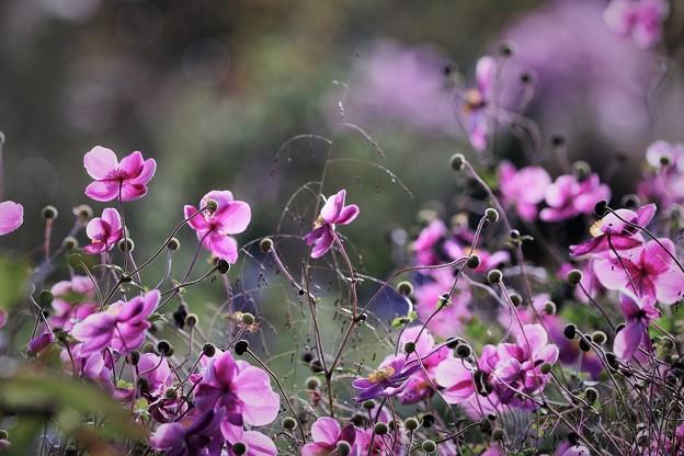 Photos: 秋の乱舞