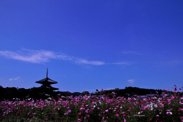 Photos: 斑鳩の寺