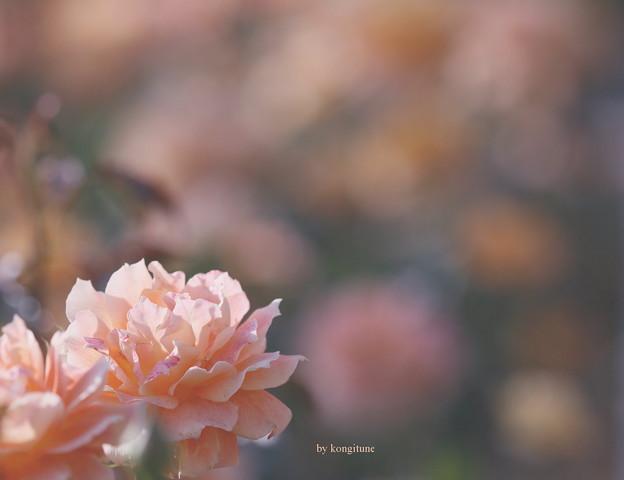 Photos: 秋の微笑み