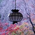 写真: 長谷寺へ