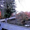写真: 秋の回廊