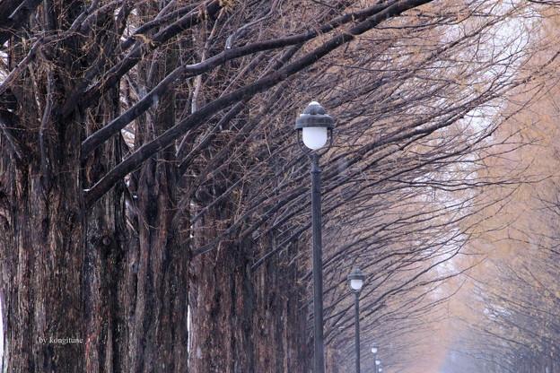 晩秋の並木