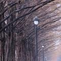 Photos: 晩秋の並木