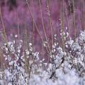 写真: 春を歌って・・・