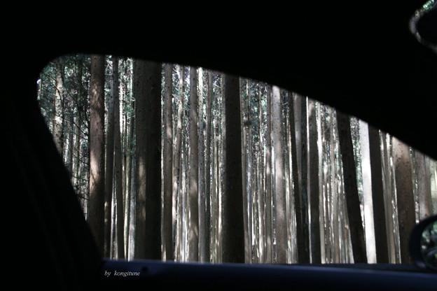 Photos: 木霊(こだま)