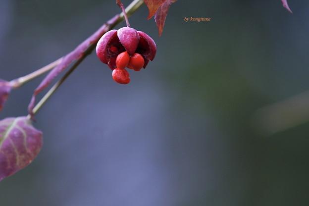 Photos: 秋の片思い