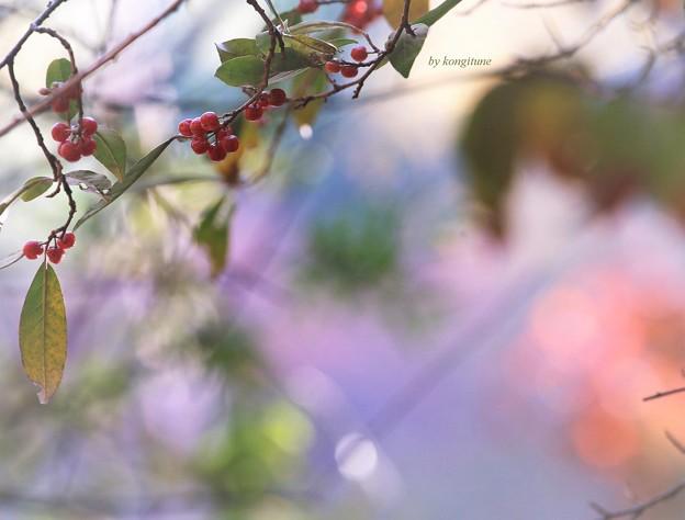 Photos: 秋グミ