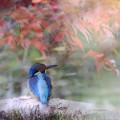 Photos: 紅葉狩り