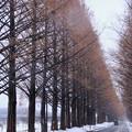 Photos: 冬の並木道