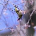 Photos: ブッラ~~~ン