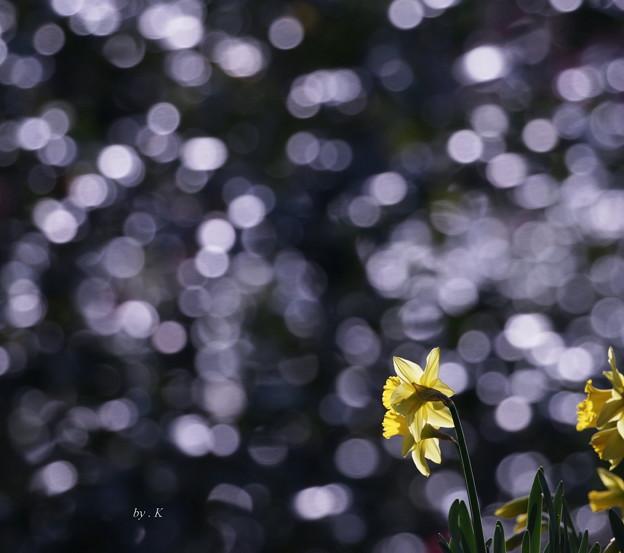 Photos: 光の中