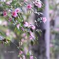 Photos: 午後の陽