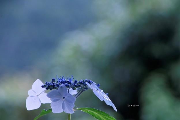しんと咲く