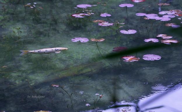 名もなき池