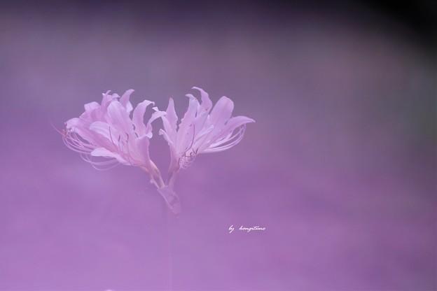 花びらフィルター