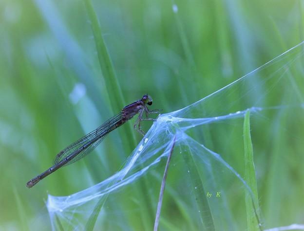 Photos: 蜘蛛の糸