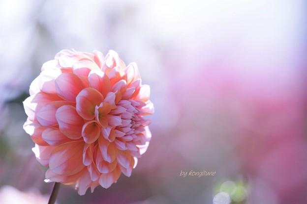 Photos: 秋の日に