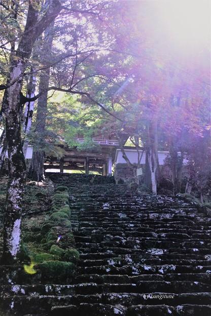 高源寺 参道 (弐)