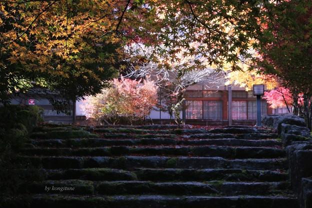 高源寺 参道 (参)