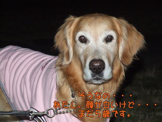 s-myu2008_1228(078)